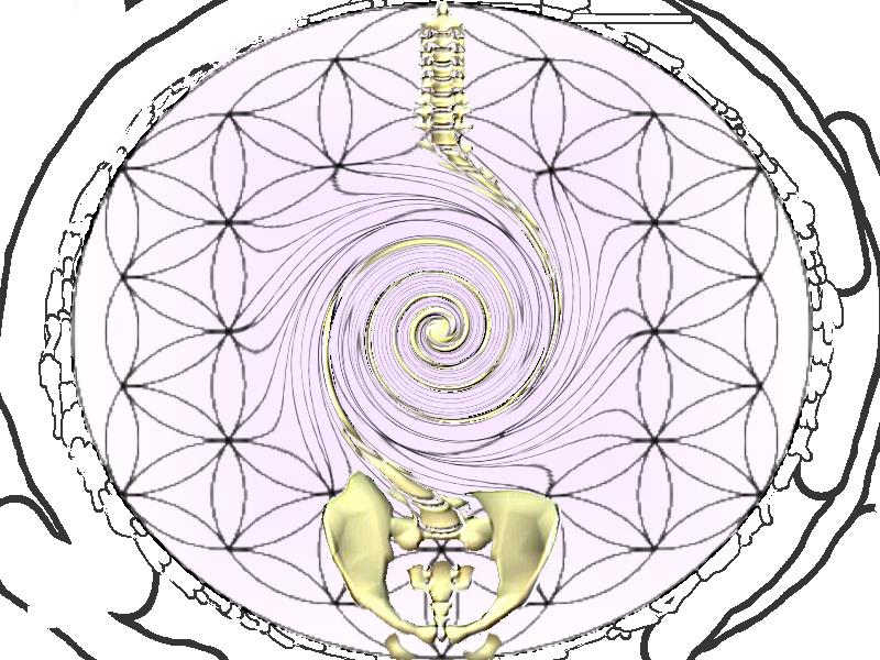 Osteopathe - David Fribourg